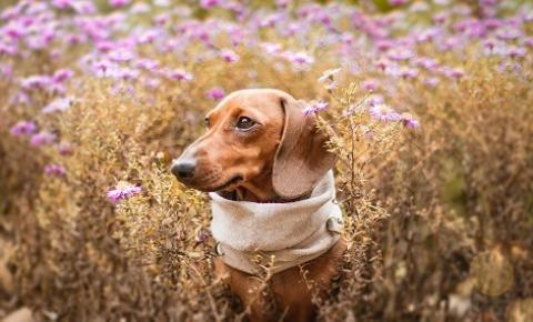 Flores são nocivas para os pets? Veja dicas para preservar a saúde e o bem-estar dos animais de estimação